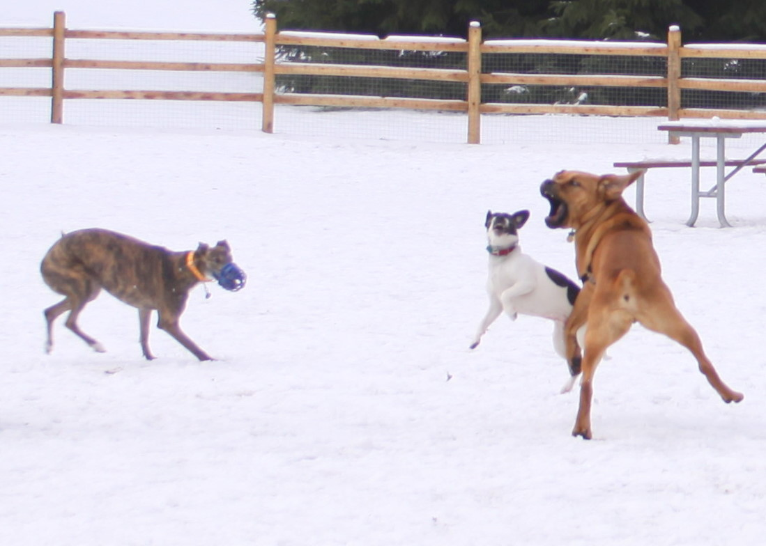 Dog Parks...Are They Worth The Risk?