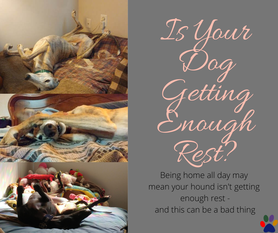 Is Your Dog Getting Enough Rest?