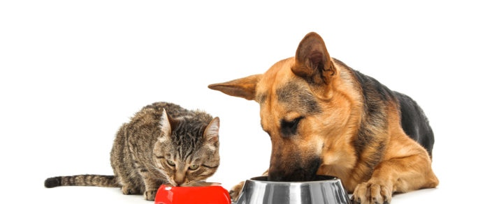 A Guide to Pet Nutrition